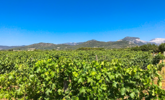 Weinfeld Patenschaft Geschenkidee Mallorca